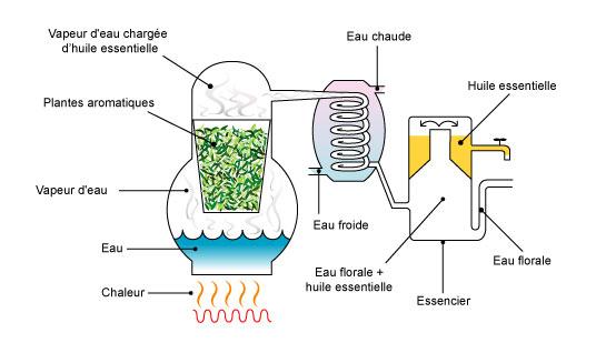 sante-essentielle-distillation-huile-essentielle