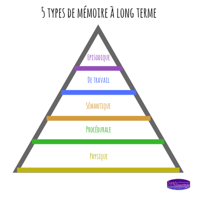 sante-essentielle-5-types-mémoire-long-terme