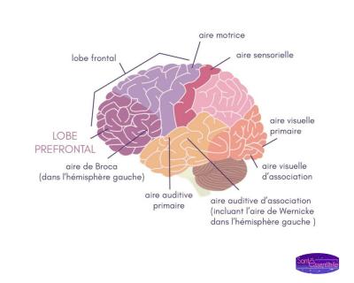 sante-essentielle-memoire-cerveau