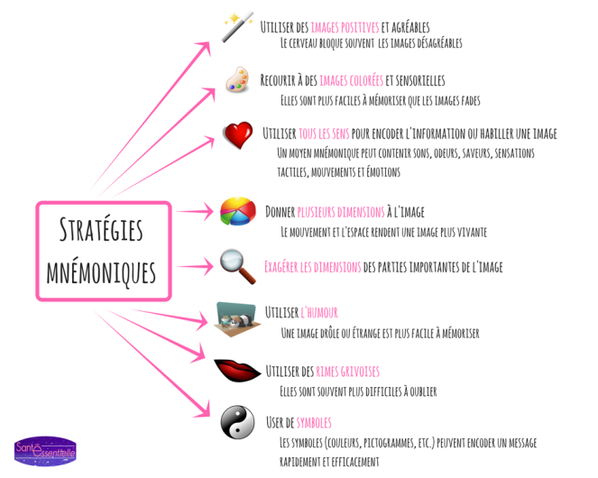 sante-essentielle-strategies-mnémoniques
