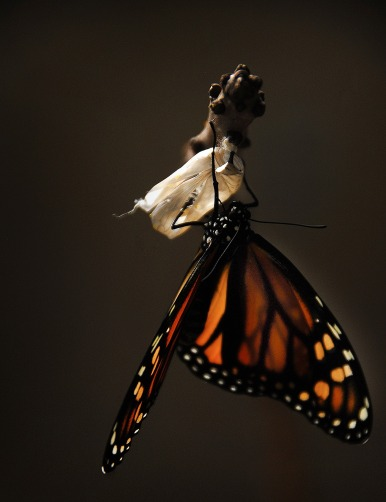 sante-essentielle-changement-metamorphose.jpg