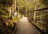 sante-essentielle-biofeedback-nature